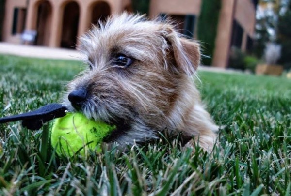 Freddie and his tennis ball