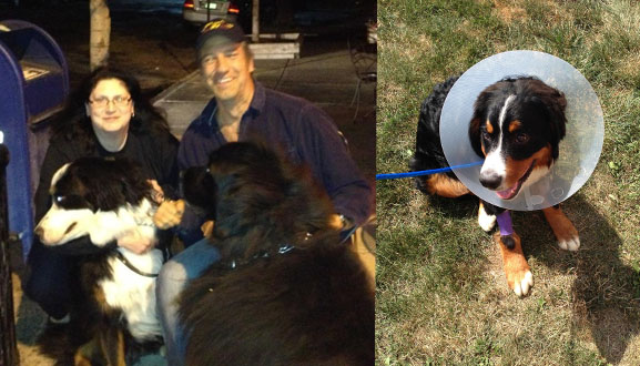Mike and fan & Moses and the cone of shame