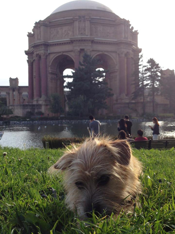 Freddy and the Palace of Fine Arts