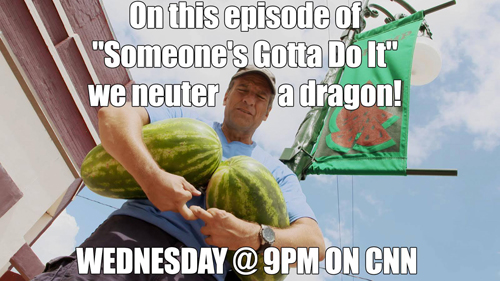 sgdi meme on this episode of sgdi we neuter a dragon