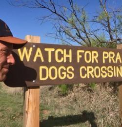 Prairie Dogs Crossing