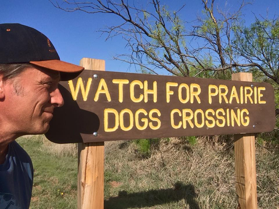 Prairie Dogs Crossing