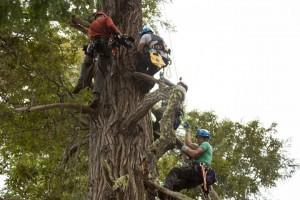 02-giant-trees