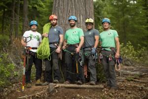 05-giant-trees
