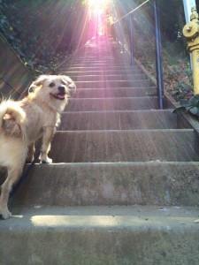 FWF - Magic Stairs