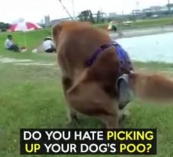 fwf poop trap - jpg