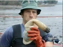 Mike Rowe - Dirty Jobs - Geoduck